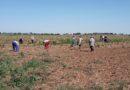 Aislados 50 temporeros en Serós (Lleida) por un enfermo de Covid-19